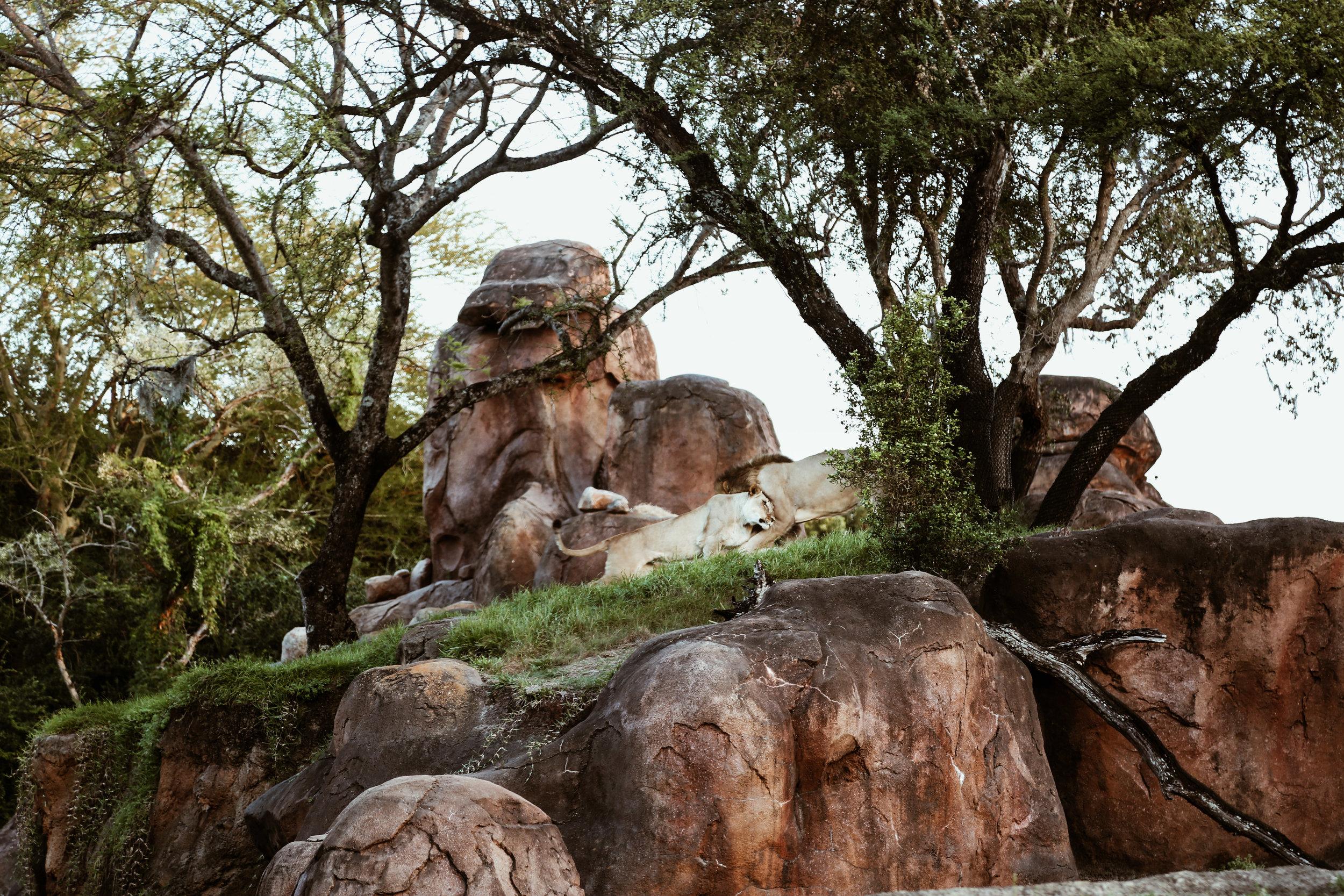 animal kingdom-33.jpg