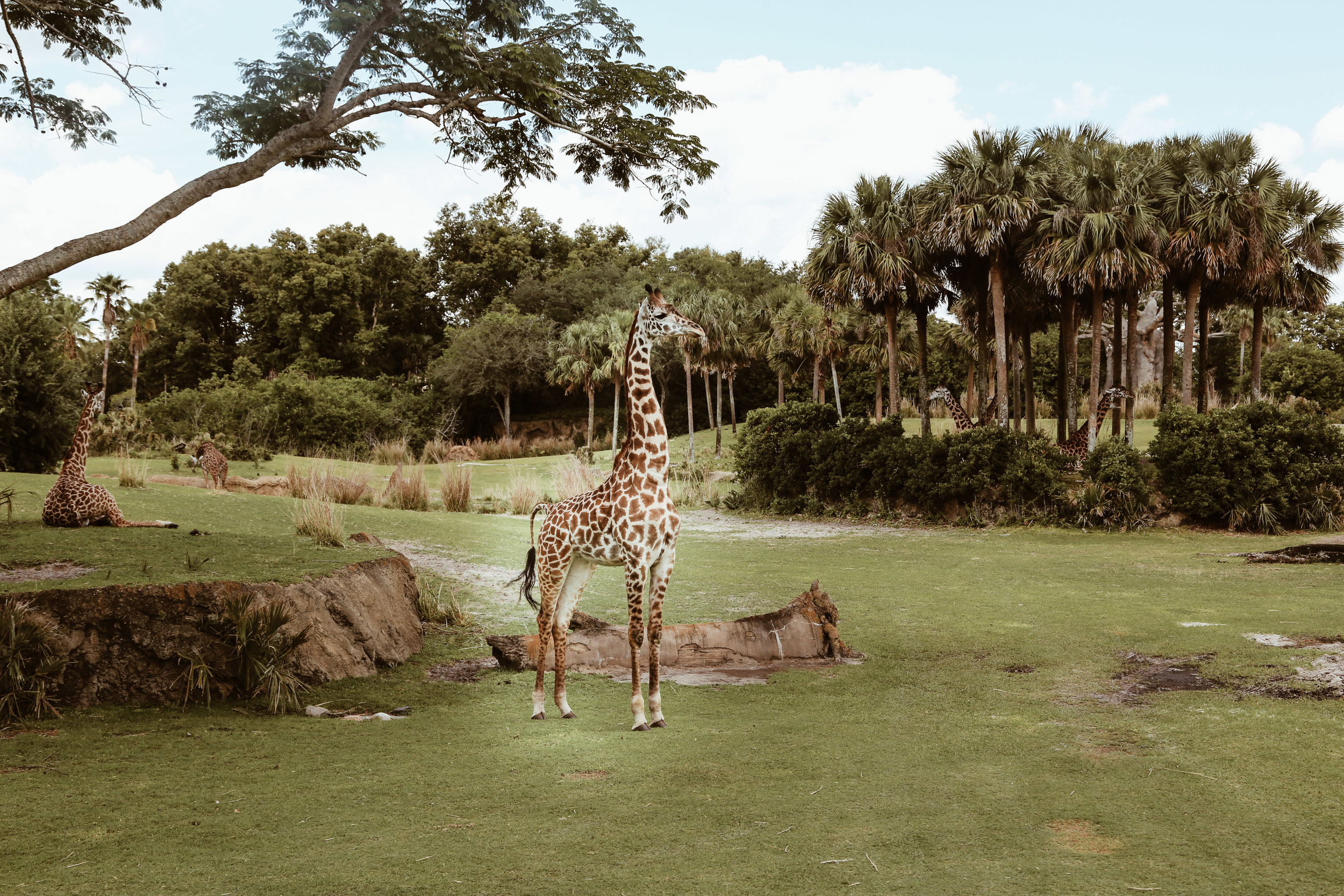 animal kingdom-18.jpg