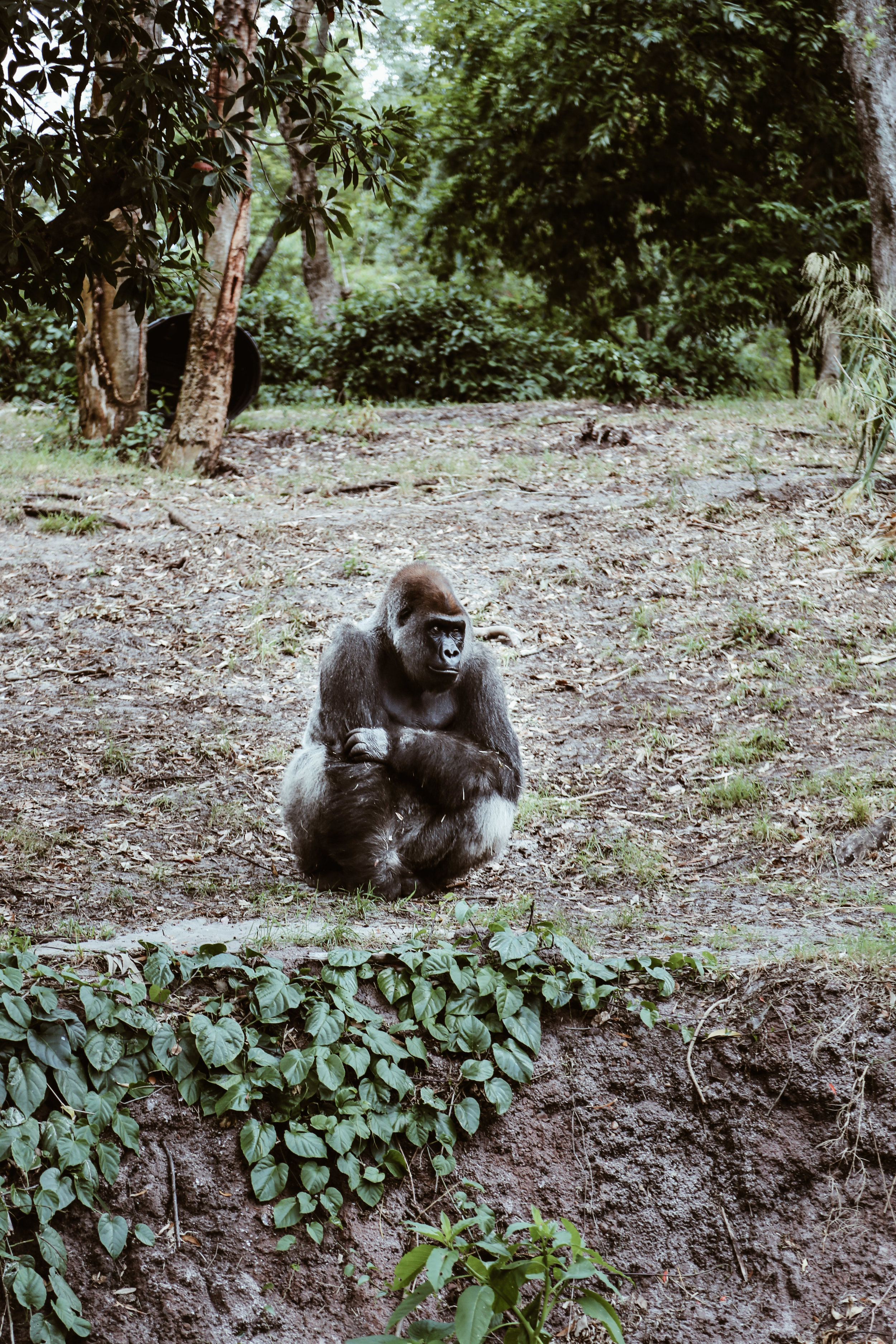 animal kingdom-14.jpg