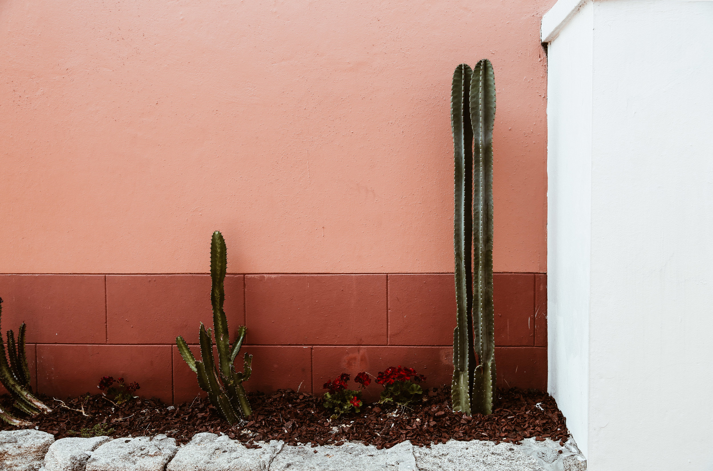 cactus and pink wall.jpg