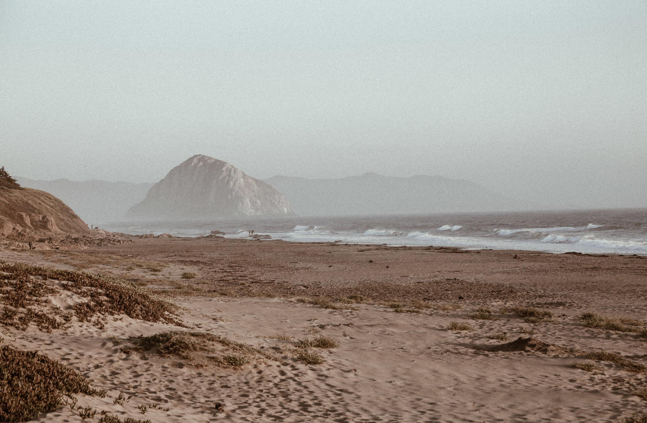 california wildlife-4.jpg