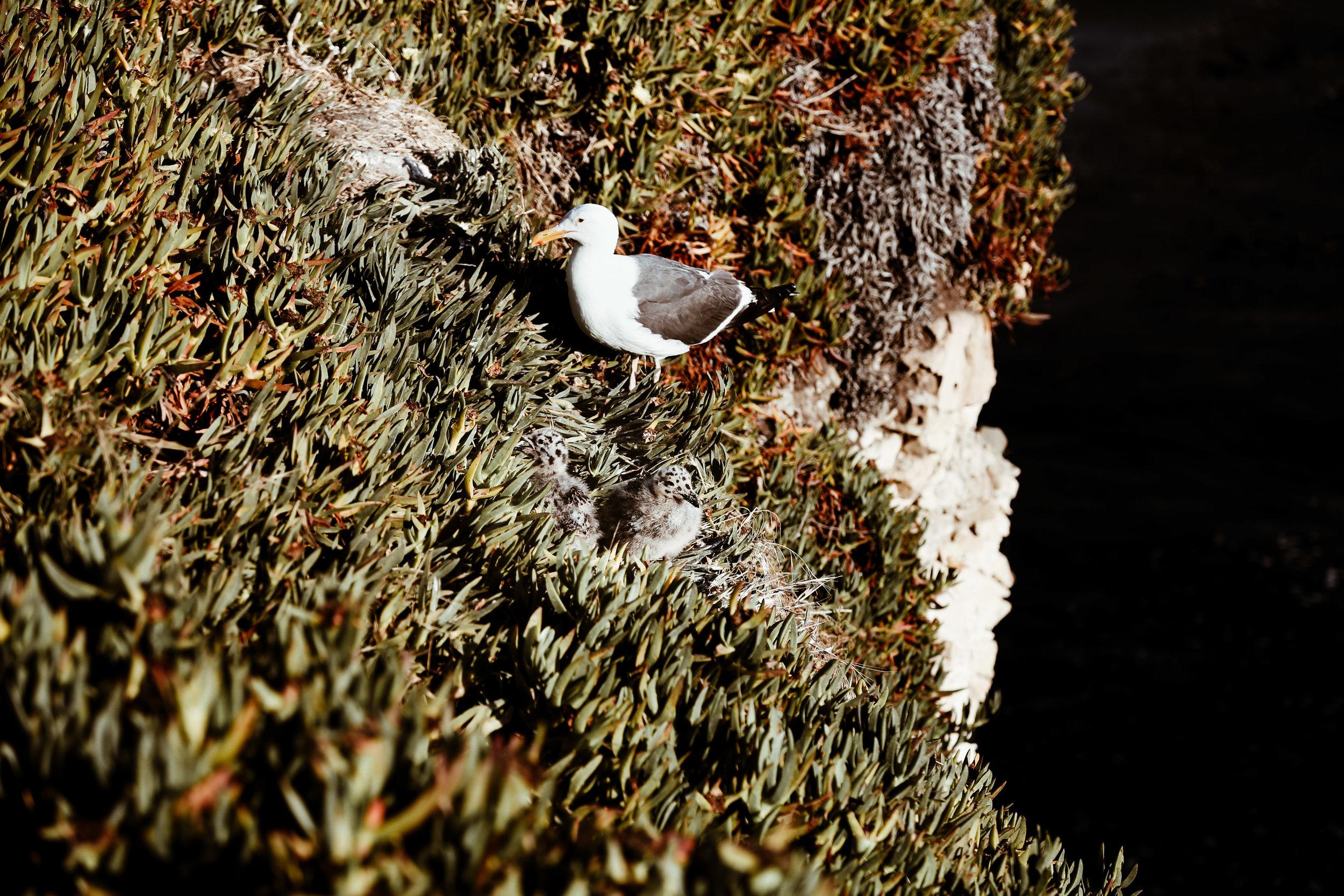 california wildlife-1.jpg