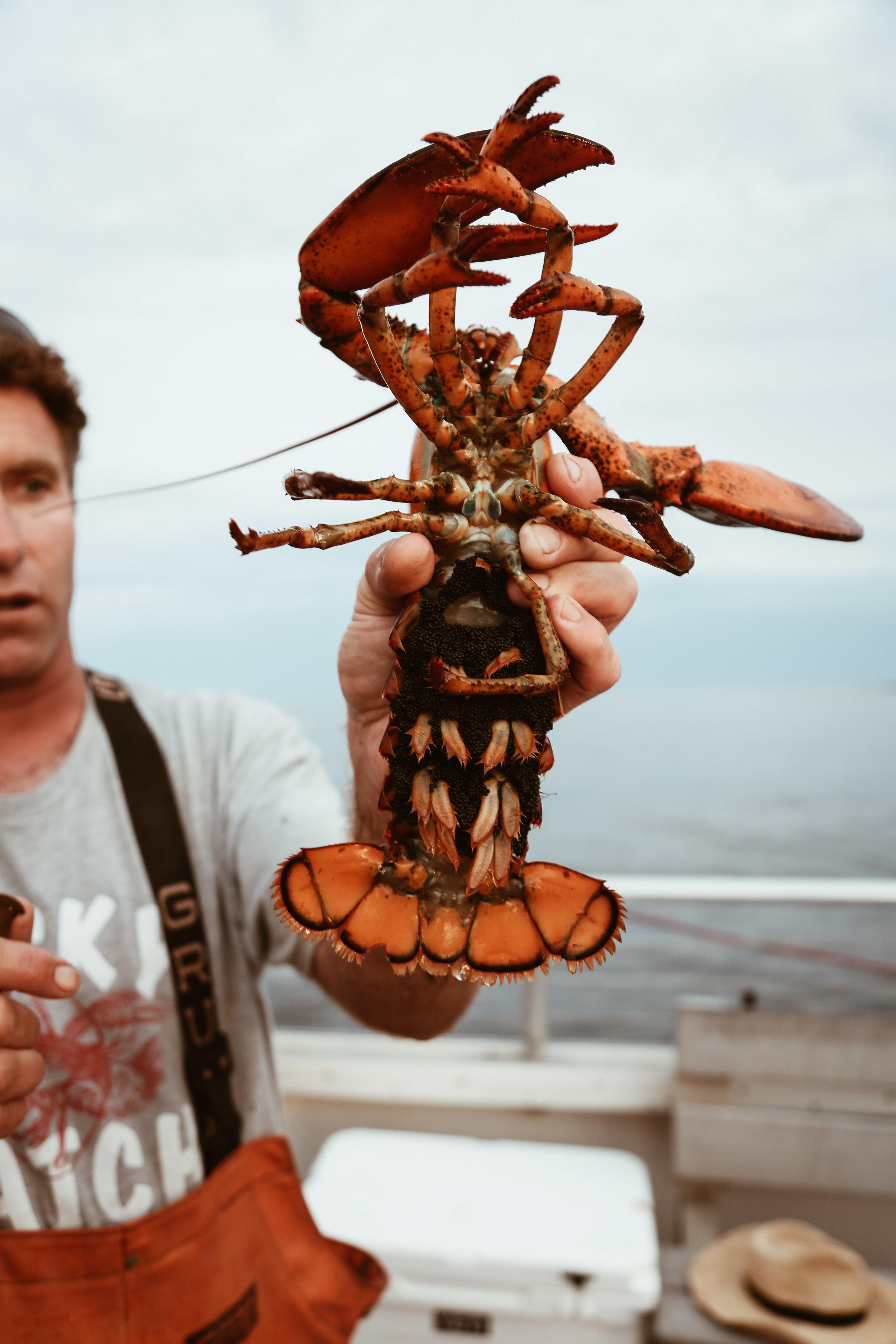 lobster boat-49.jpg