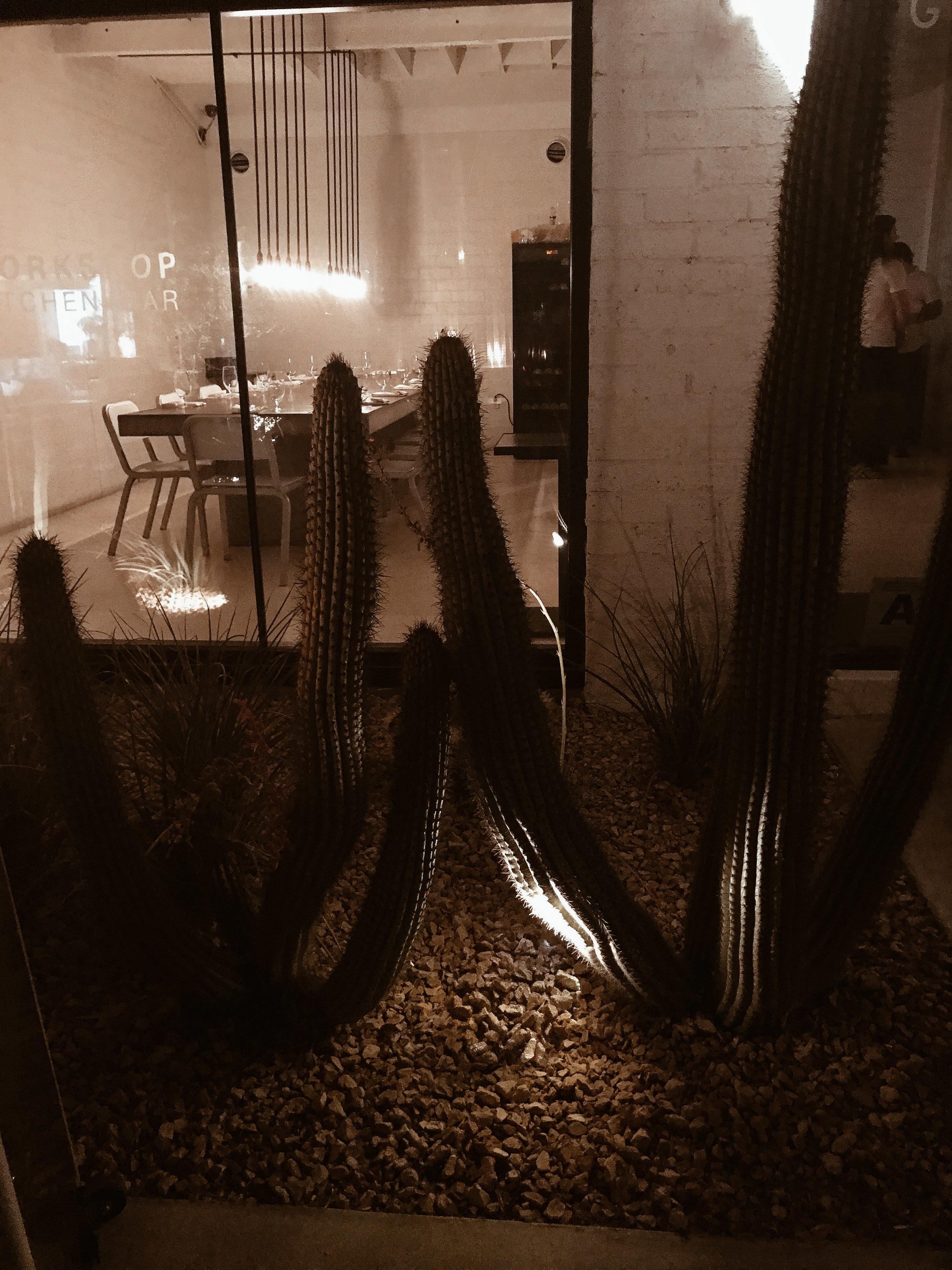 Palm Springs-2.jpg