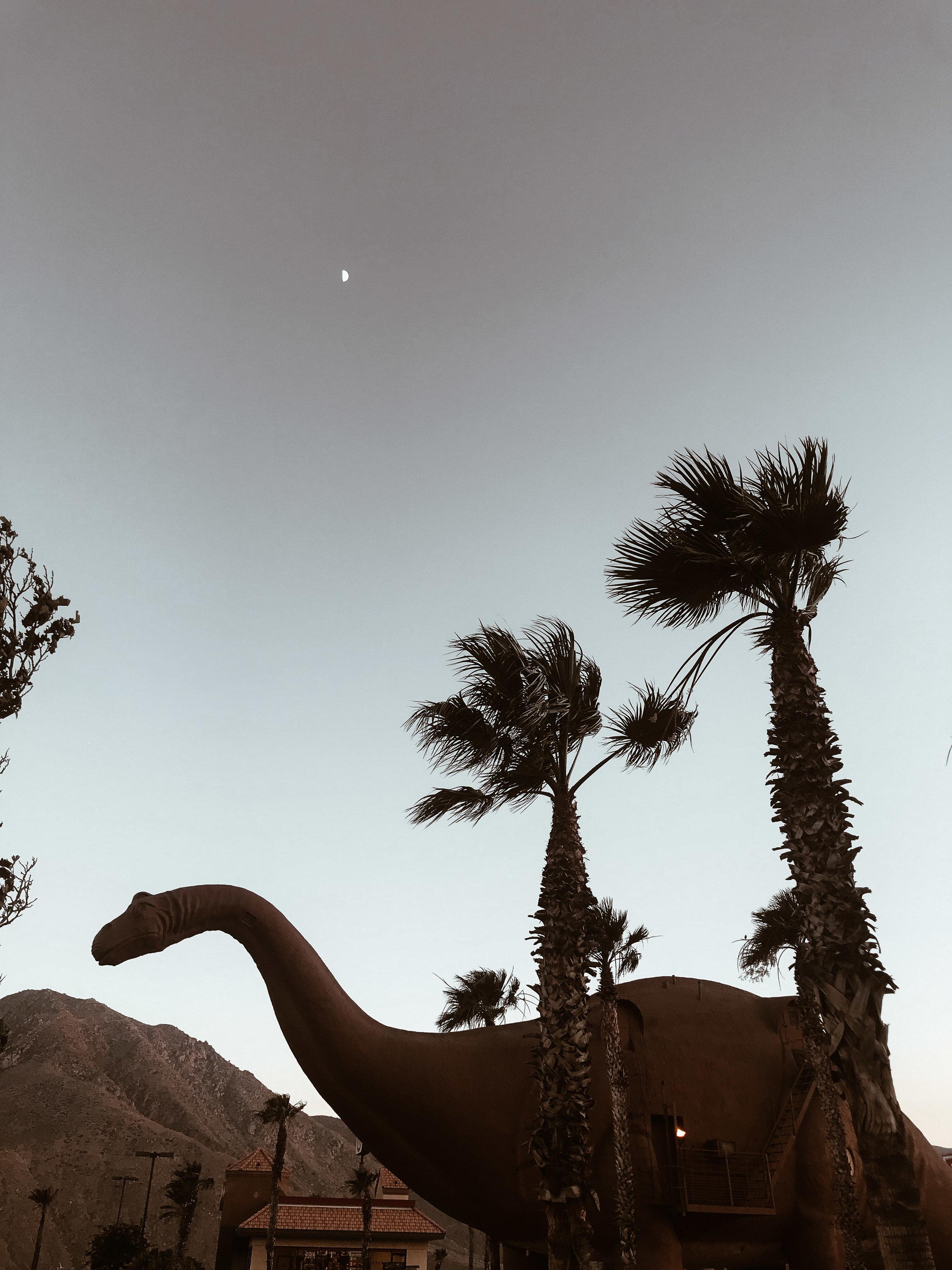 Palm Springs-13.jpg