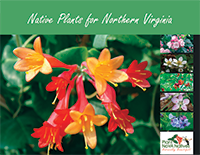 Northern-Virginia-Native-Plant-Guide.png