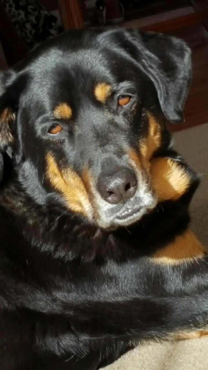 Marrli, our dog.