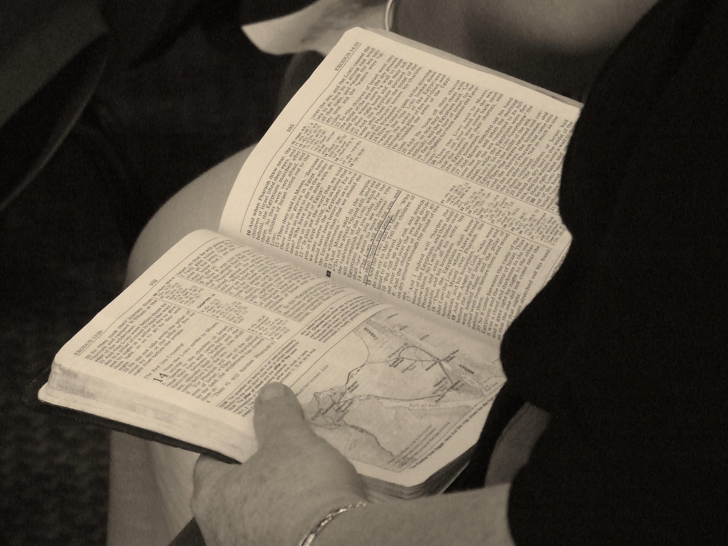 biblebuddieslogo-fw.png