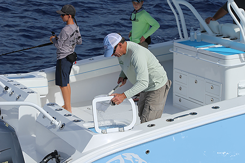 AMPLE WELLS - The 31, 36, and 42 all feature twin livewells with clear lids in the cockpit corners where they're most easily accessible. Rounded corners and available pressurization systems keep baits fresh on long runs.A range of cockpit tackle storage and rigging options are also available.