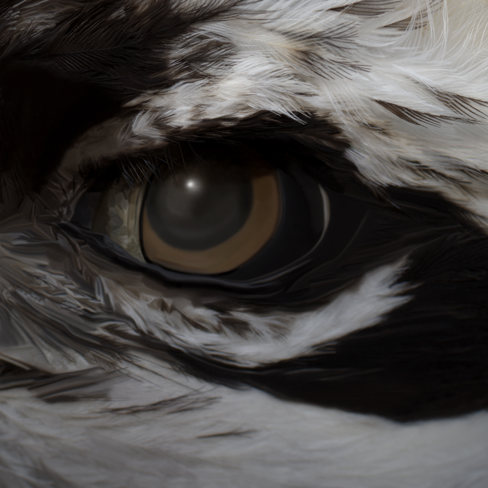 Osprey Eye.Vll