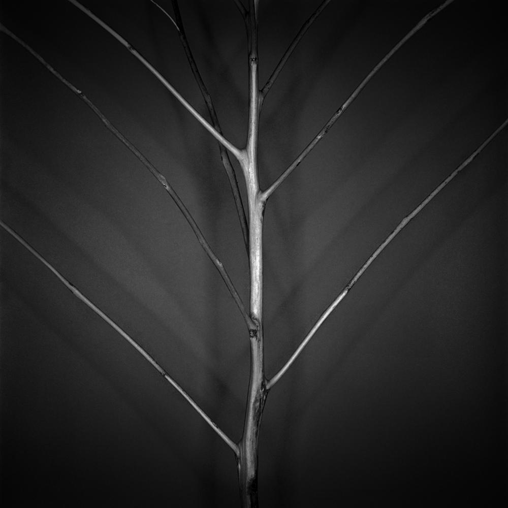 Root.Tumbleweed.1