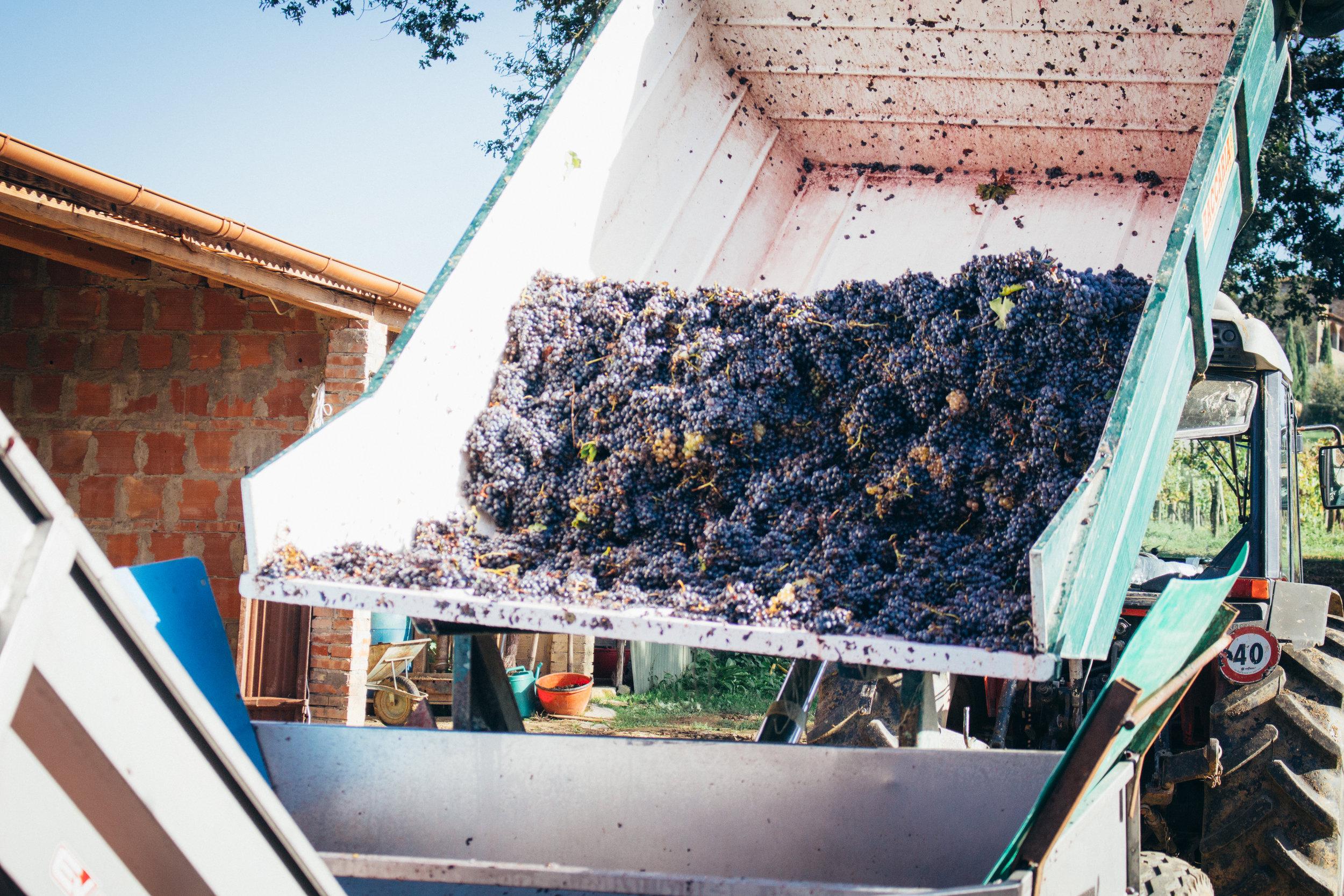 winecellar3.jpg