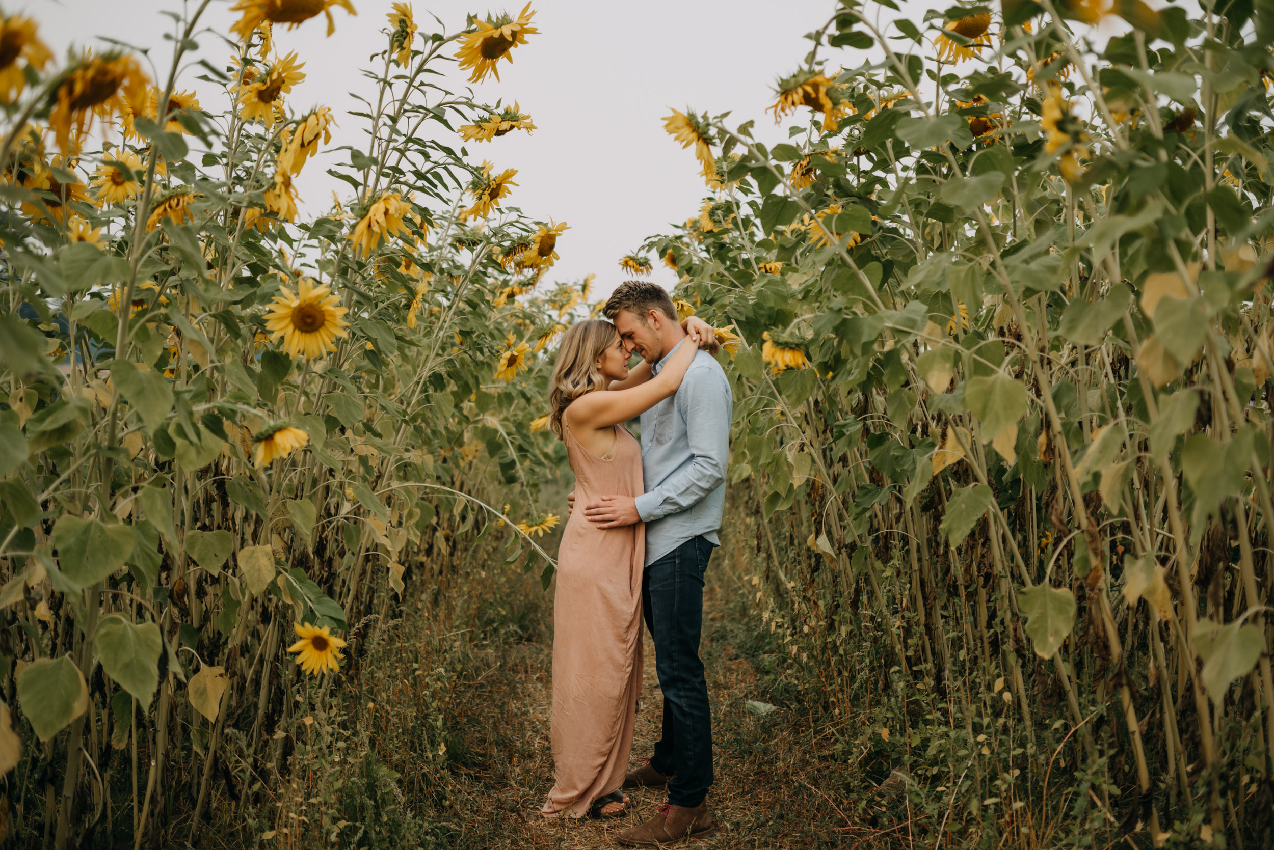 Sauvie-Island-Oregon-Sunflower-Portland-Engagement-3875.jpg