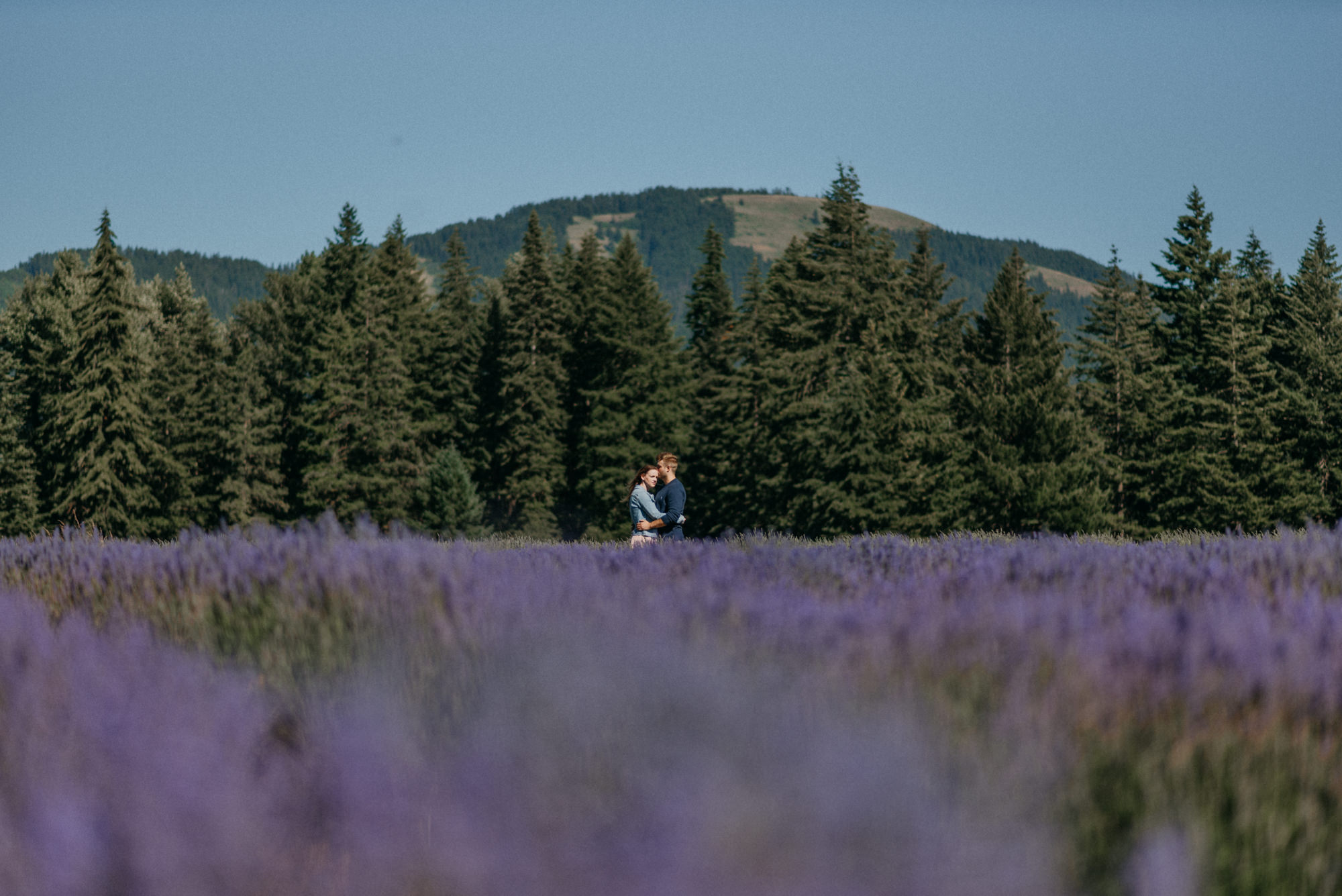 20-Mt-hood-lavender-farms-engagment-couple-summer-7542.jpg