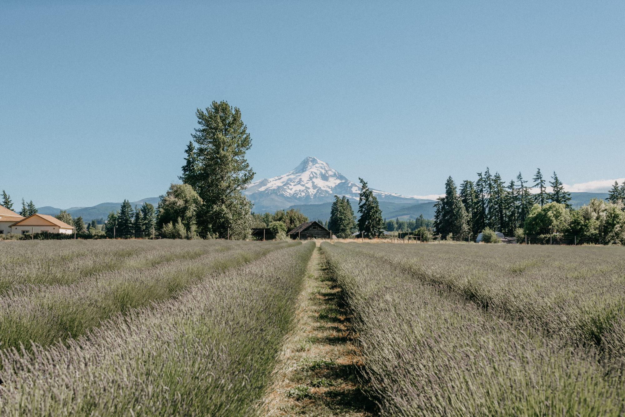 34-Mt-hood-lavender-farms-engagment-couple-summer-7912.jpg