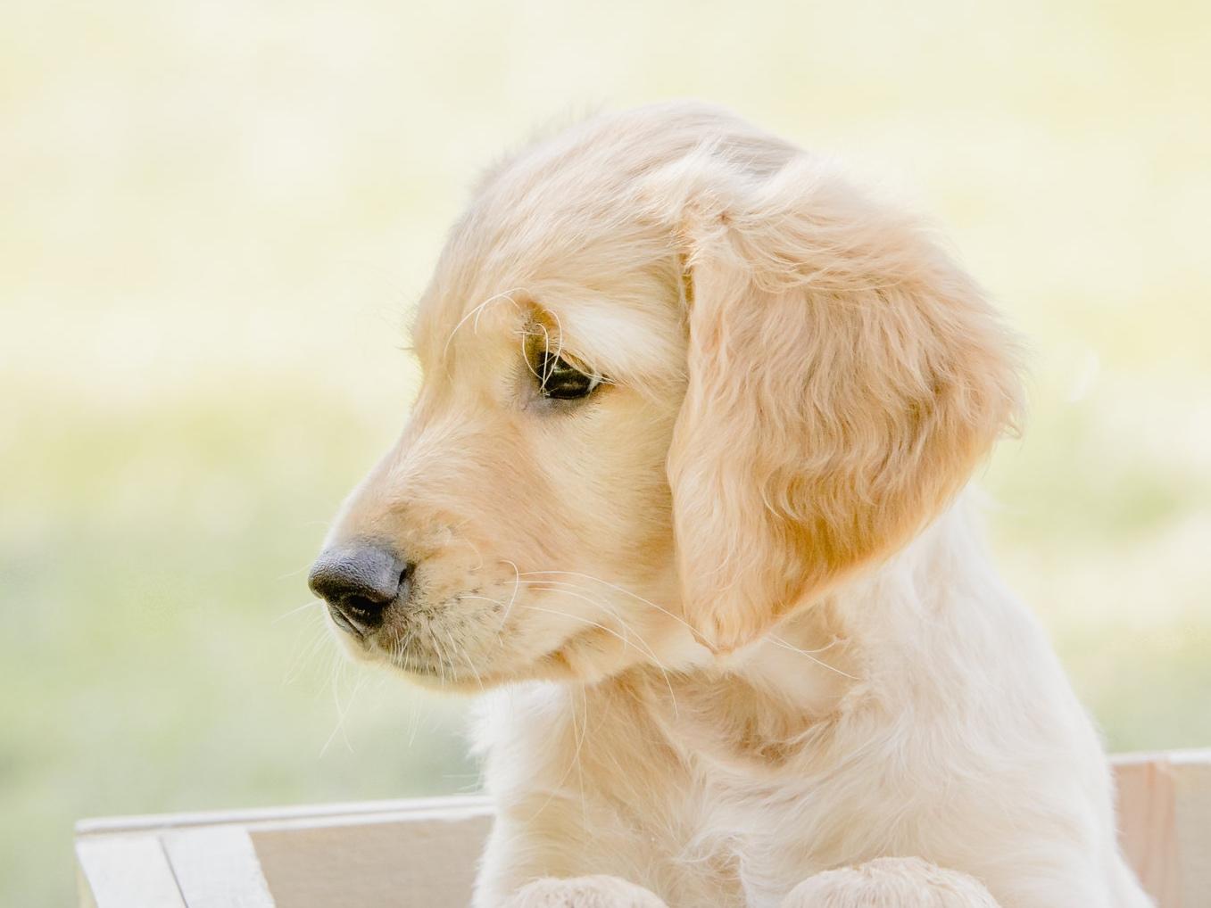 minnesota-animal-communication101.jpg