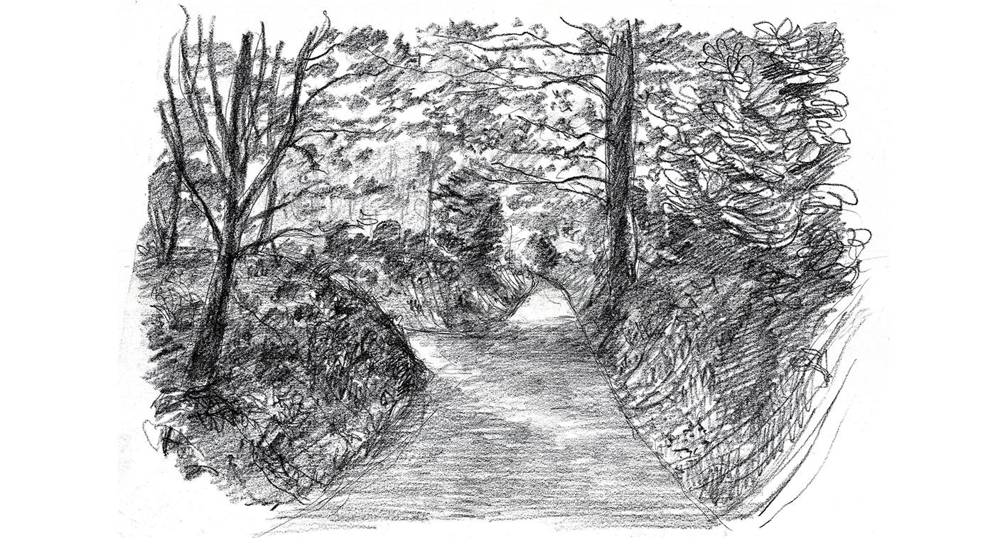Surrey garden D.jpg