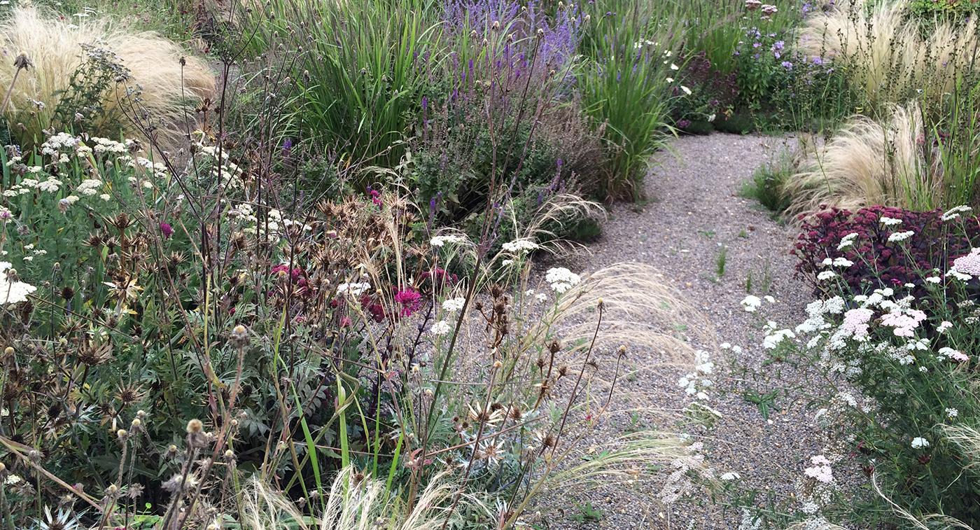 Surrey garden Q.jpg