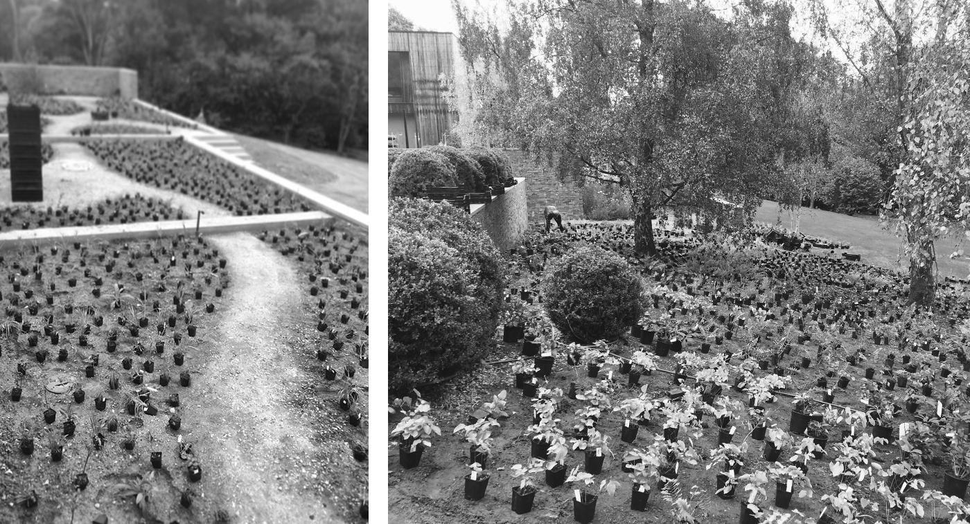 Surrey garden VV.jpg