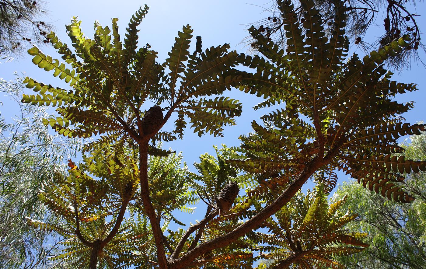JHS Perth garden 01.jpg