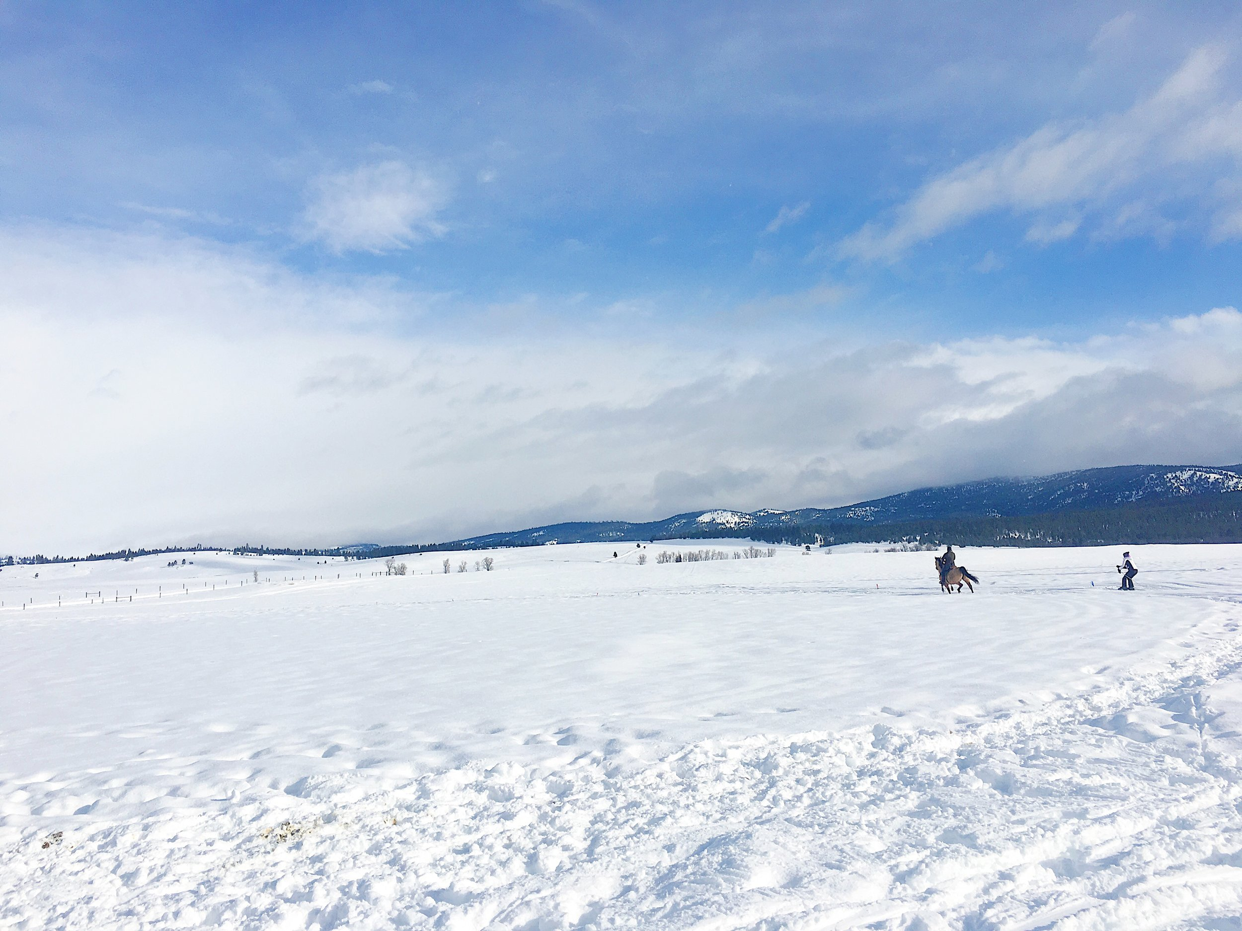 Skijoring is harder than it looks!
