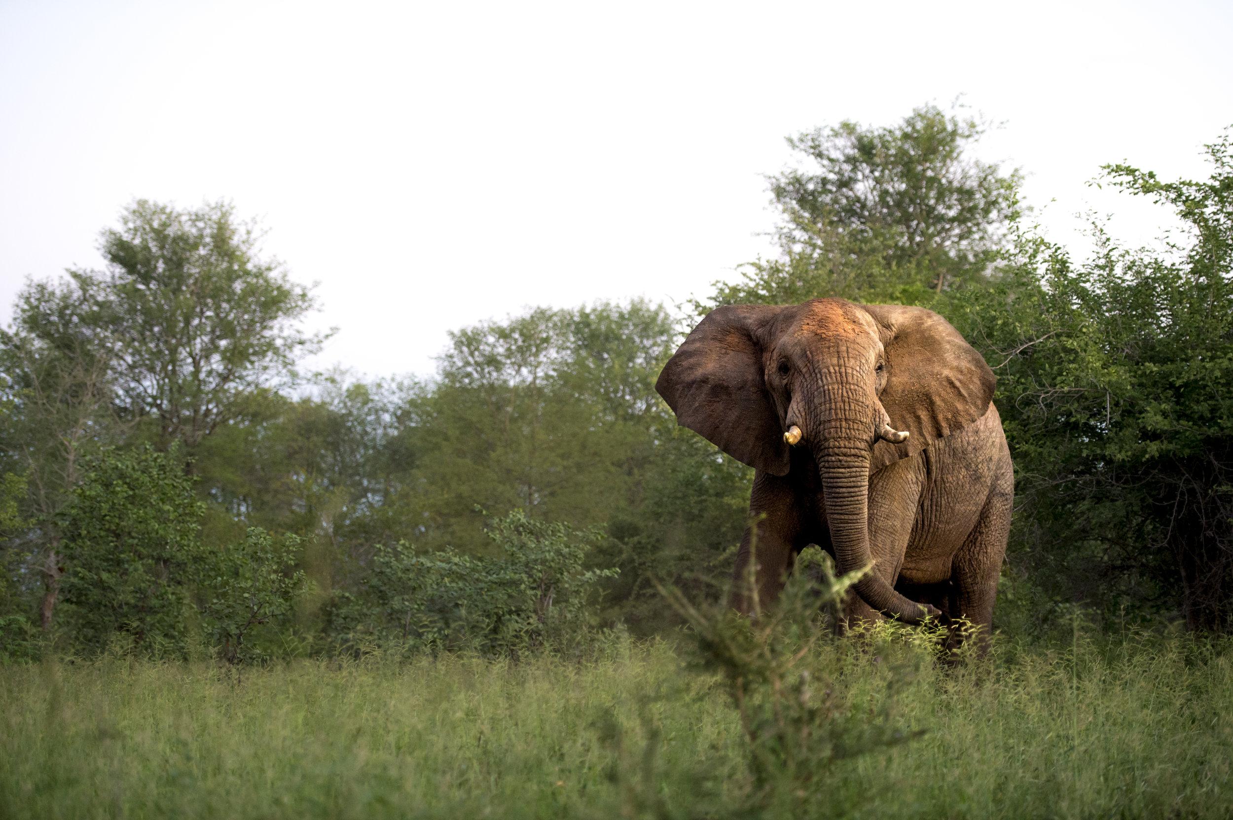 Singita Pamushana (Wildlife - Elephant)-4.jpeg