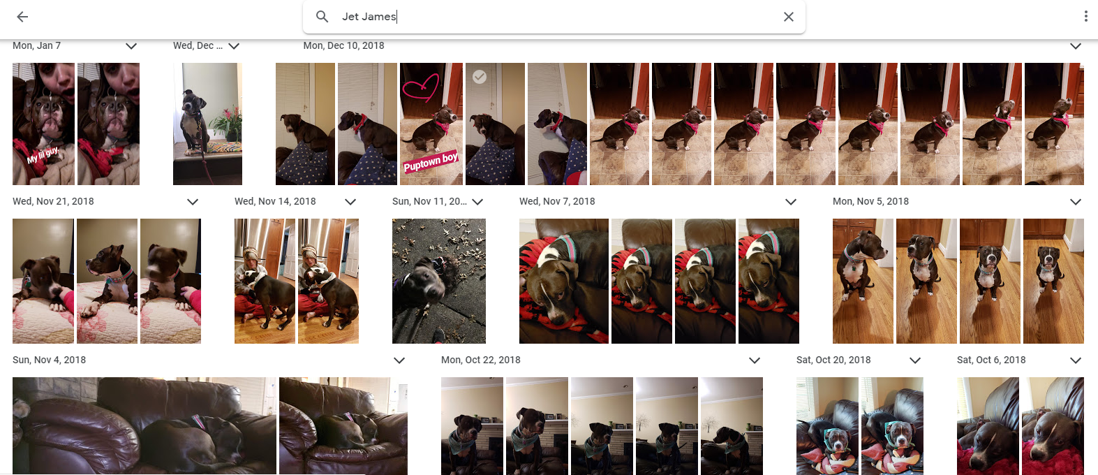"I typed ""Jet James"" (my sister's dog's name) in the Google Photos search bar, and this is what came back"