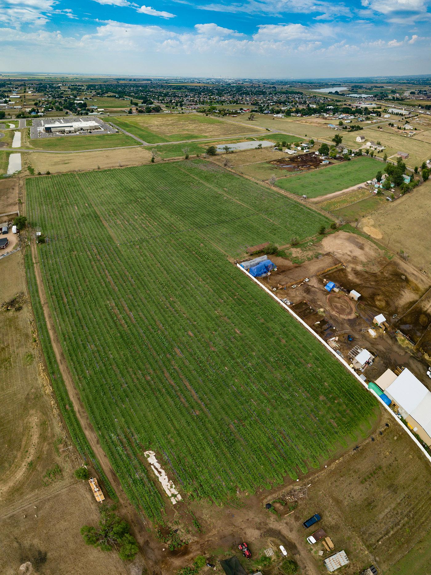 CBD-Farm-Aerial-080918-0001WEB.jpg