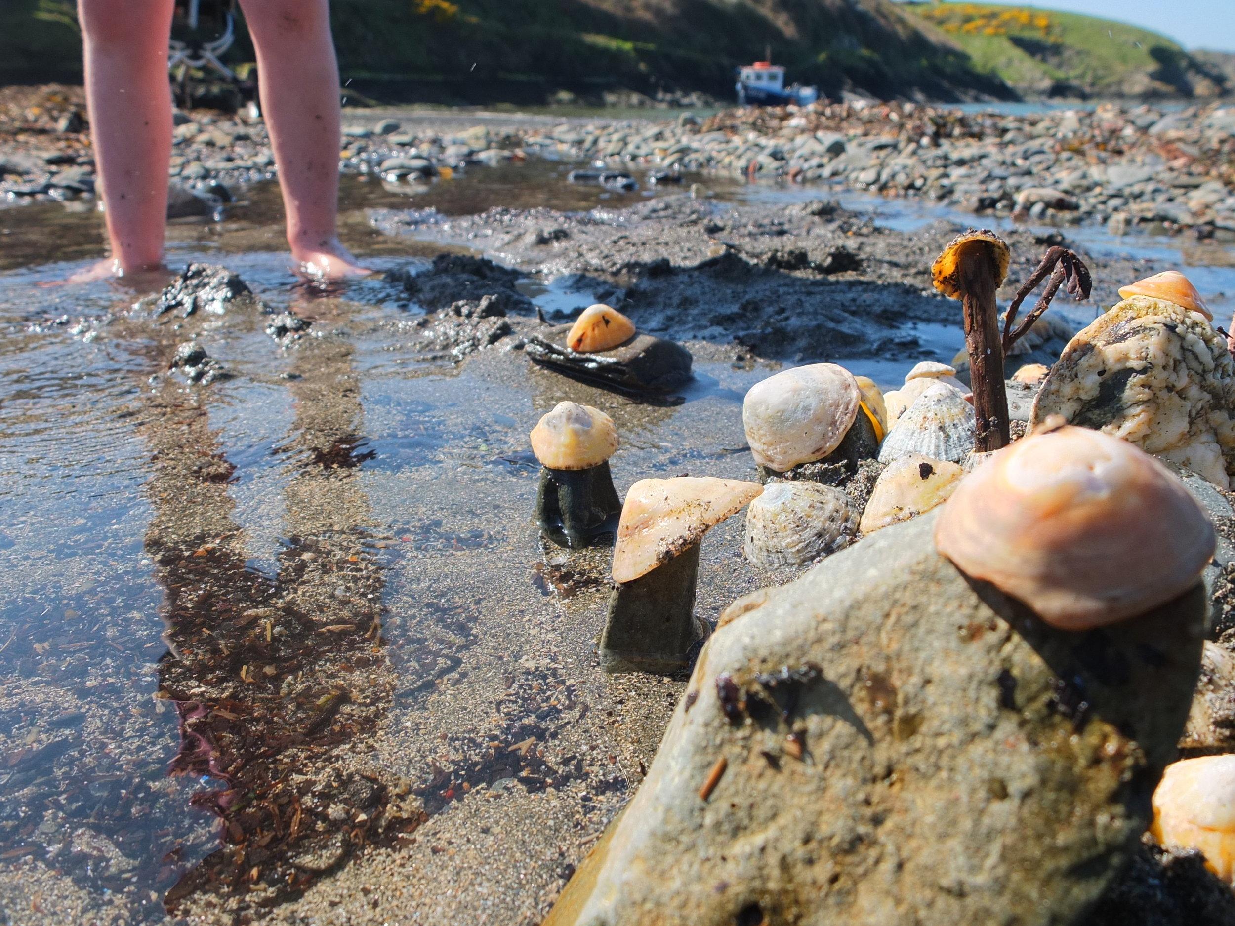 Shells and rock pools