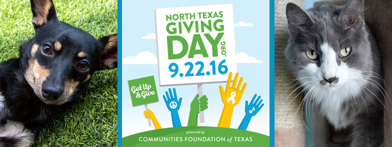 Collage with a dog, a cat, and the North Texas Giving Day logo