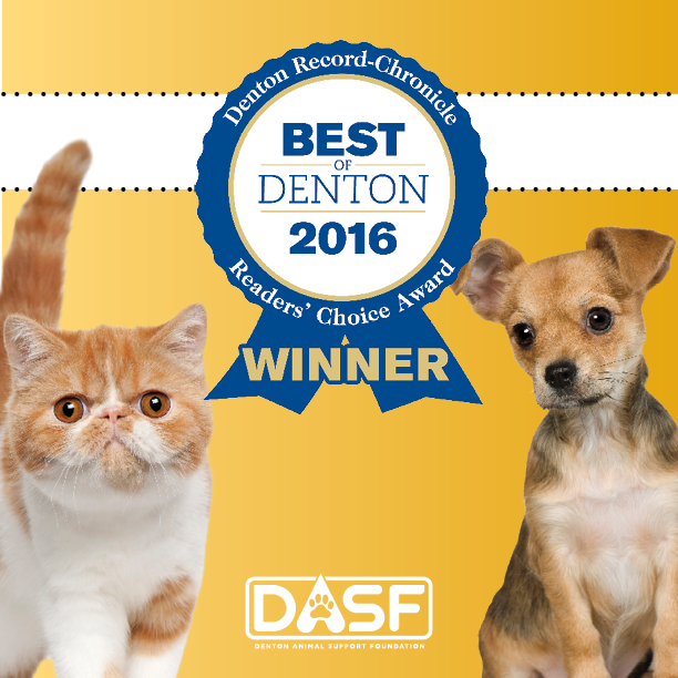 A kitten and puppy posing with the Best of Denton ribbon