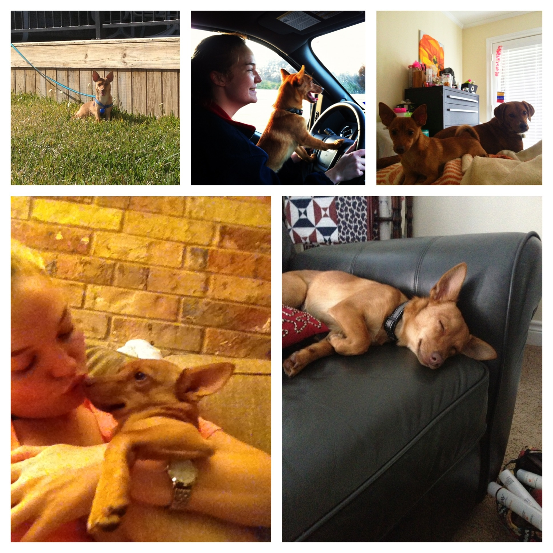 Photo collage of Berneuse and Kasey