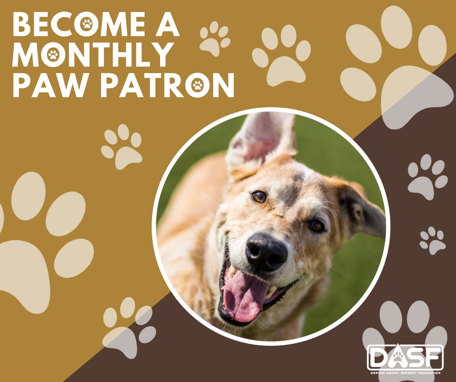 Paw Patron Graphic with a photo of a happy dog