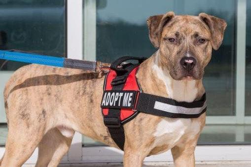 adopt+me+shelter+pet.jpg