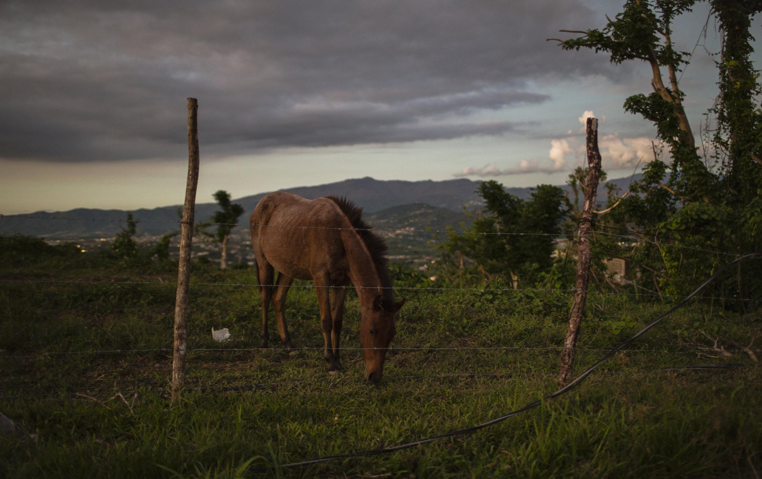 Horse @ Mariana_01.jpg