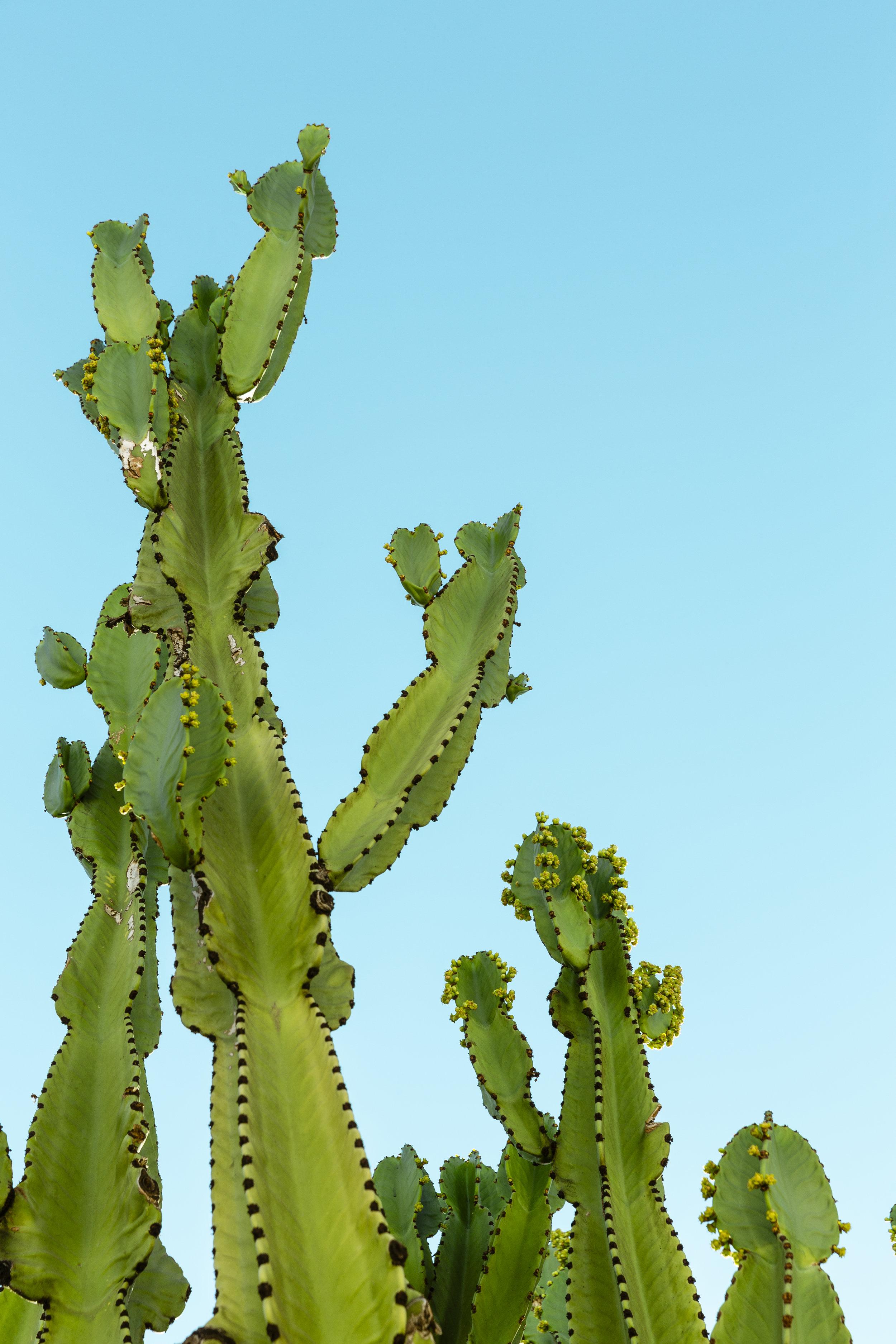 Cactus_01.jpg