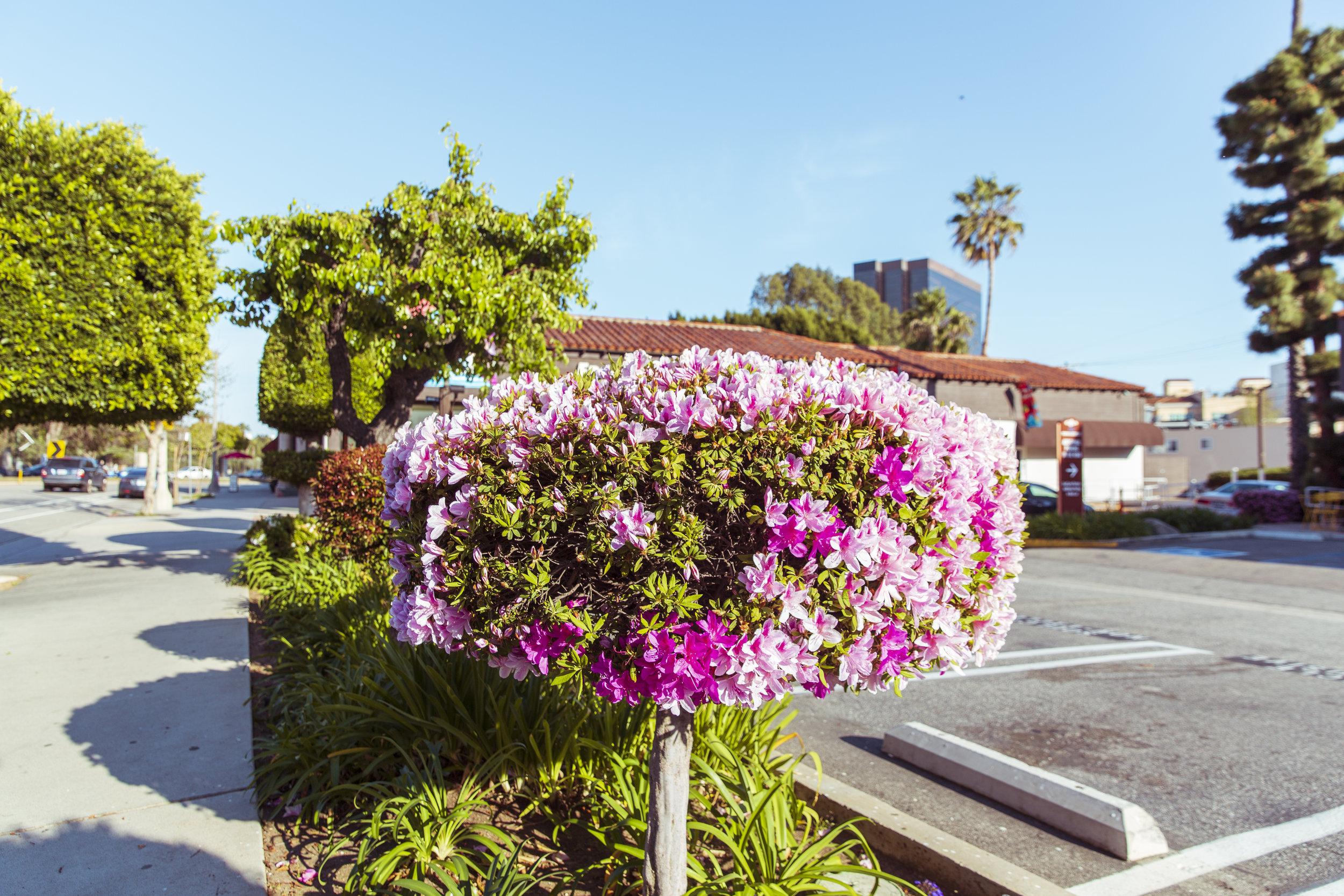 Flower tree.jpg