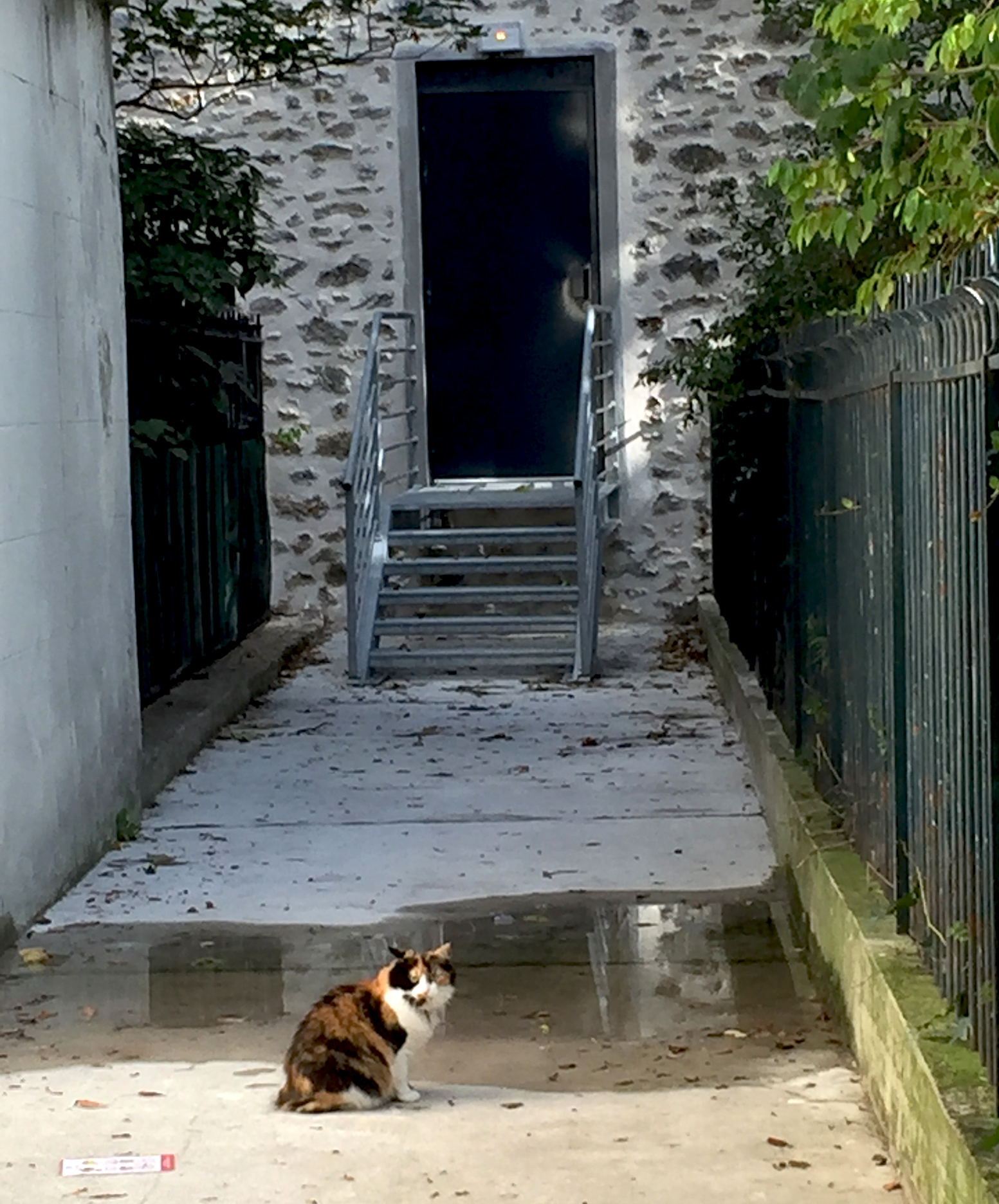 Rue du Mont-Cenis, in the 18th arrondissement. Who did you expect? Le Chat Noir?