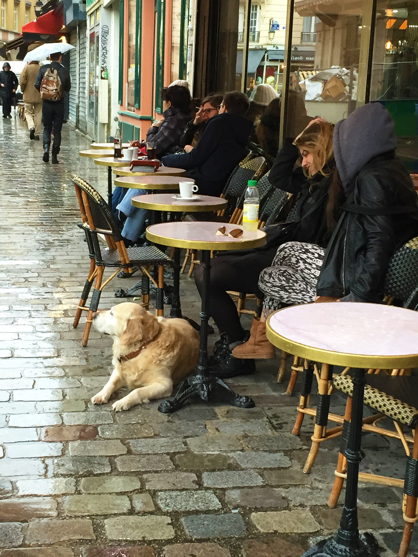 A Parisian dog practicing his people-watching skills