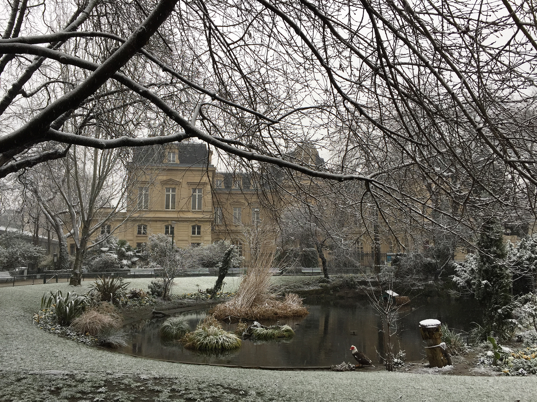 Mairie of the 3rd arrondissement. The duck was indecisive. Fearing cold water, perhaps?