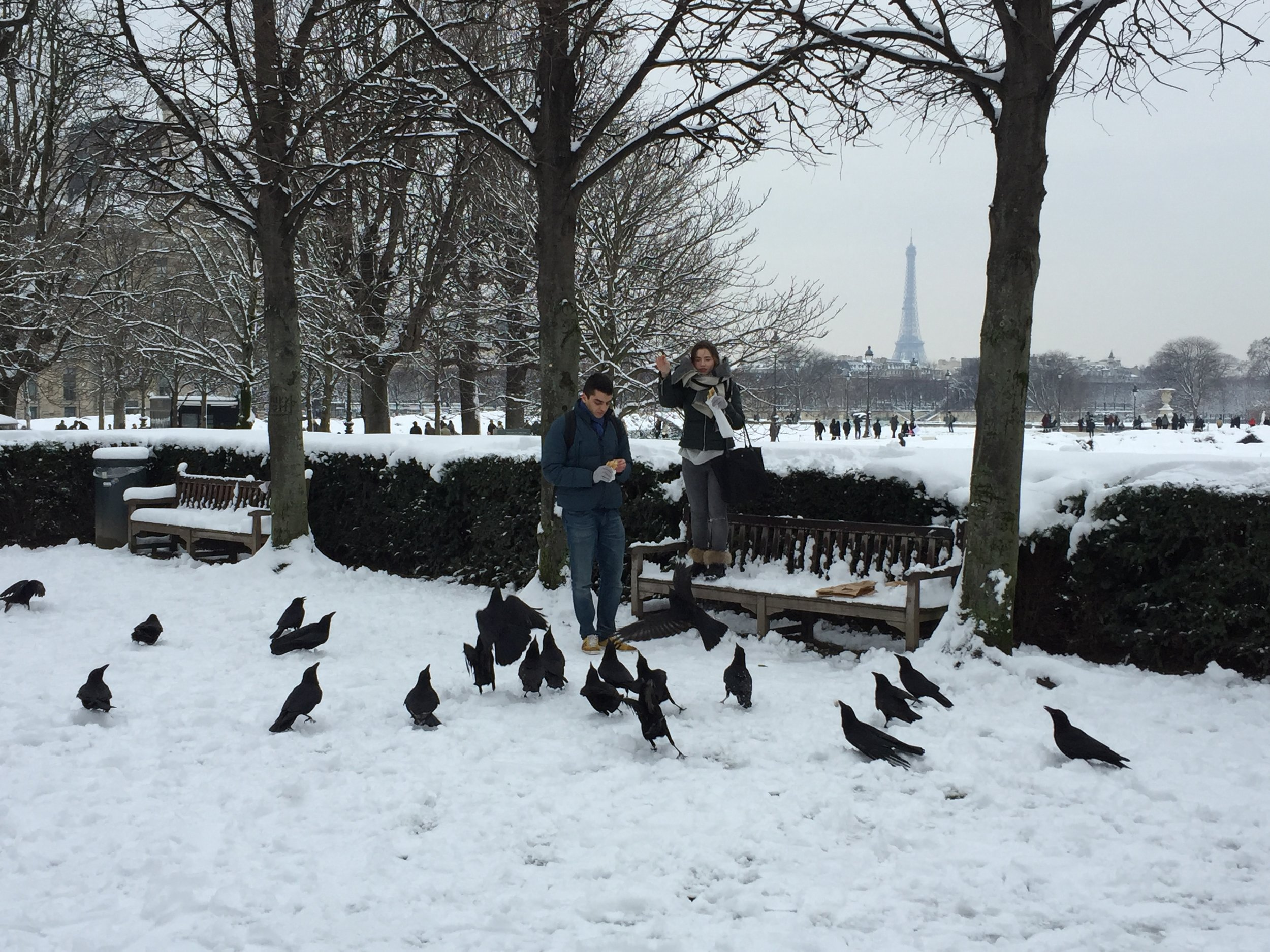 In the Tuileries gardens, these birds might be cold but not hungry!