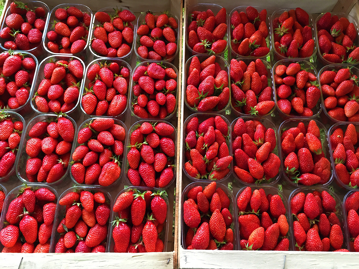 The Gariguette is the most popular strawberry variety in France