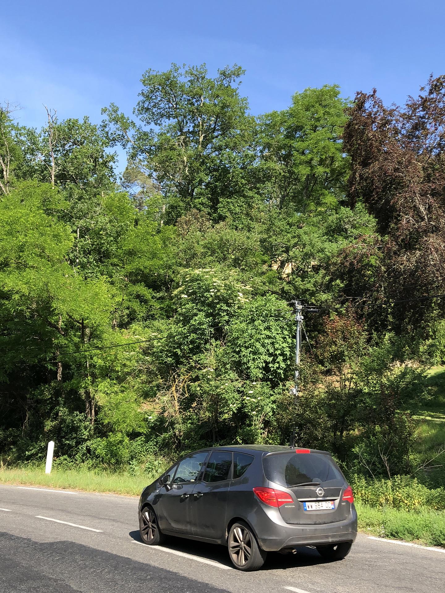 La maison Lafon is barely seen through the trees above Départementale 704