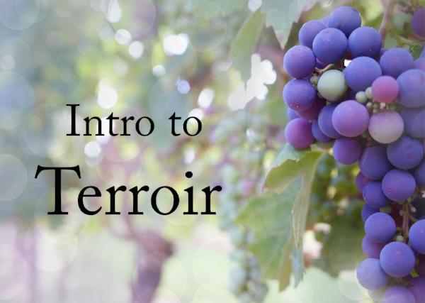 Episode 039 - Intro to Terroir.jpg