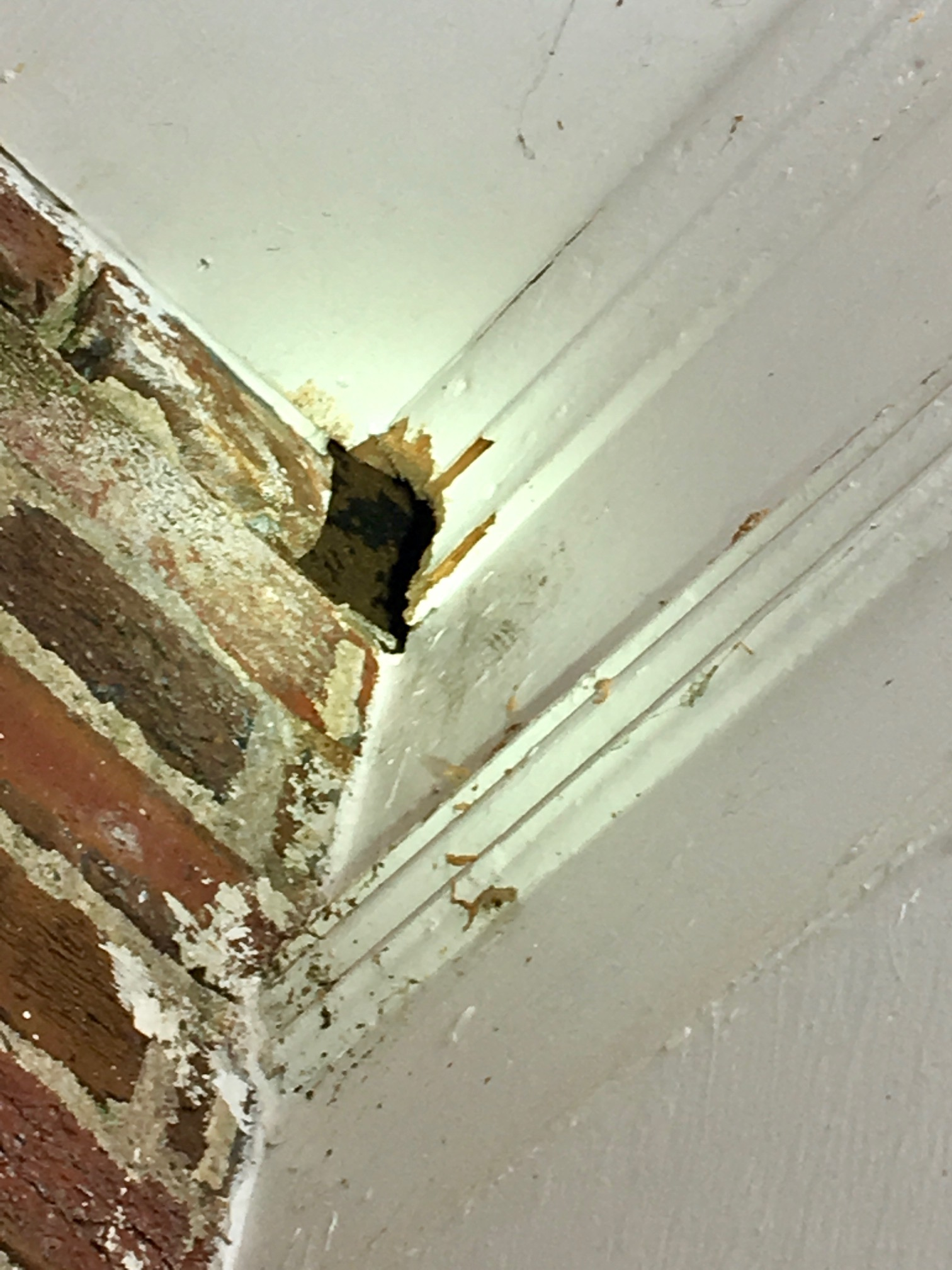 Squirrel hole that we located in a corner of brick and siding.