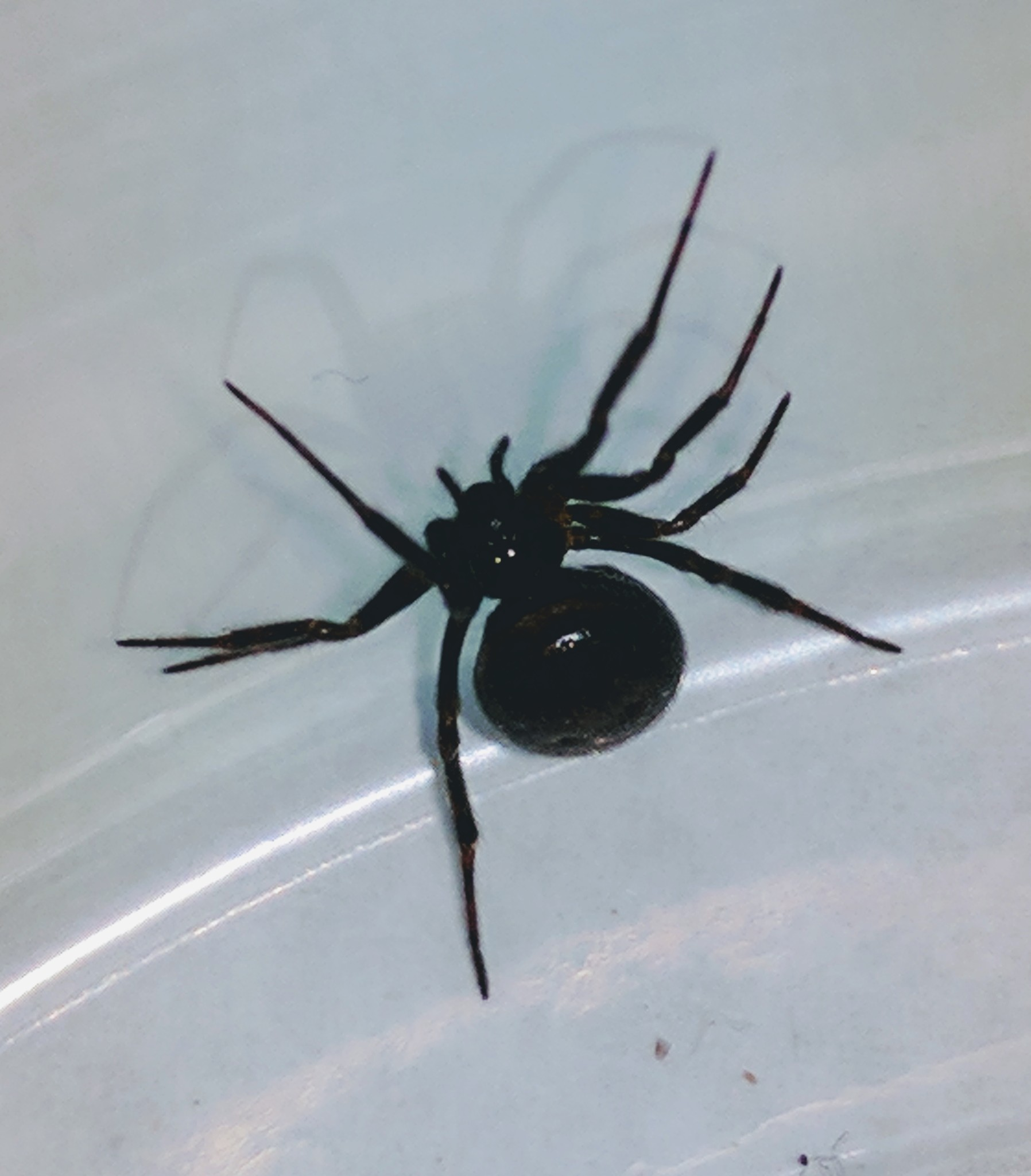 We can treat for spiders on the interior of the home to help the problem.