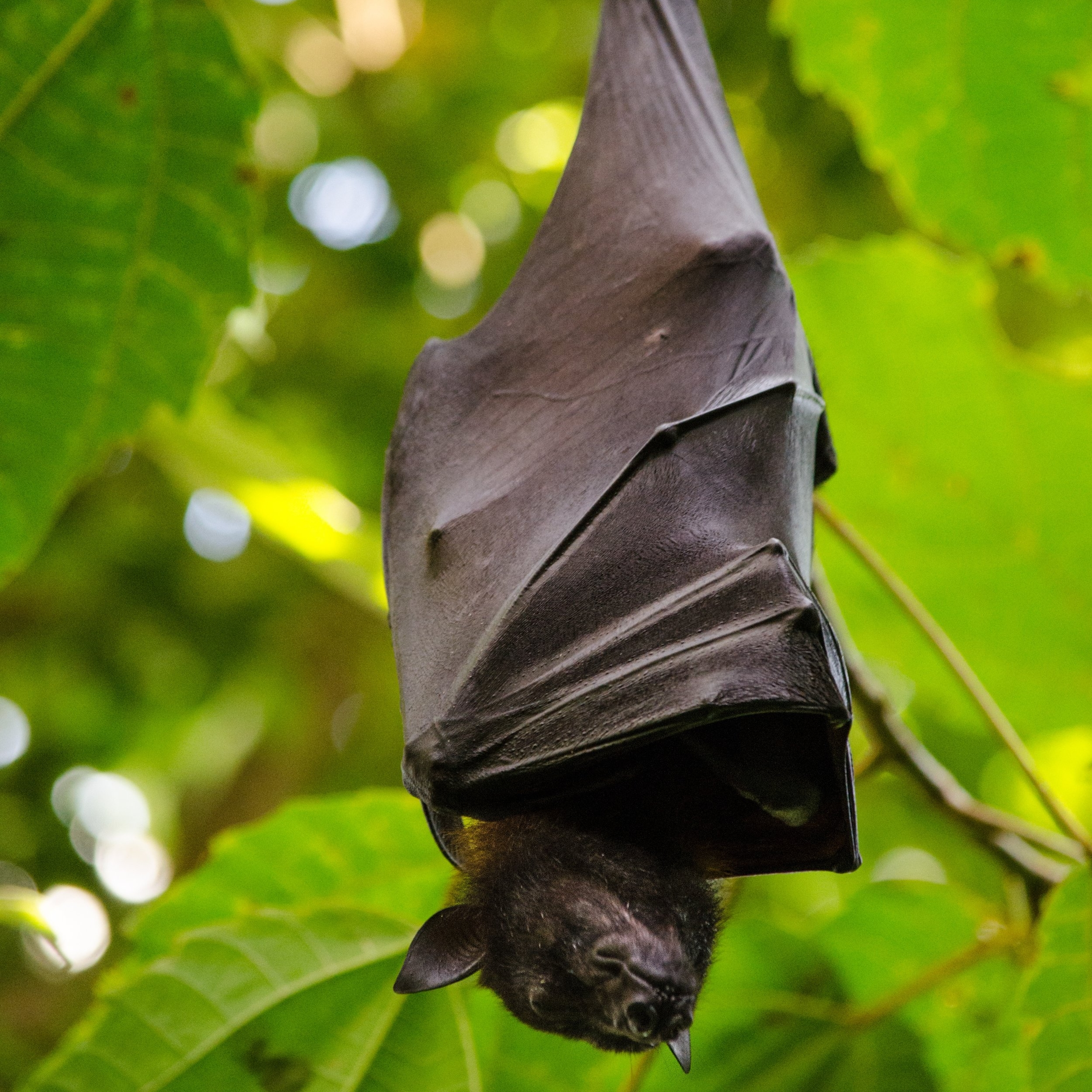 I am hearing scratching in my ceiling and walls mostly at sunset and sunrise. Occasionally I hear clicking-type noises. -  Bats