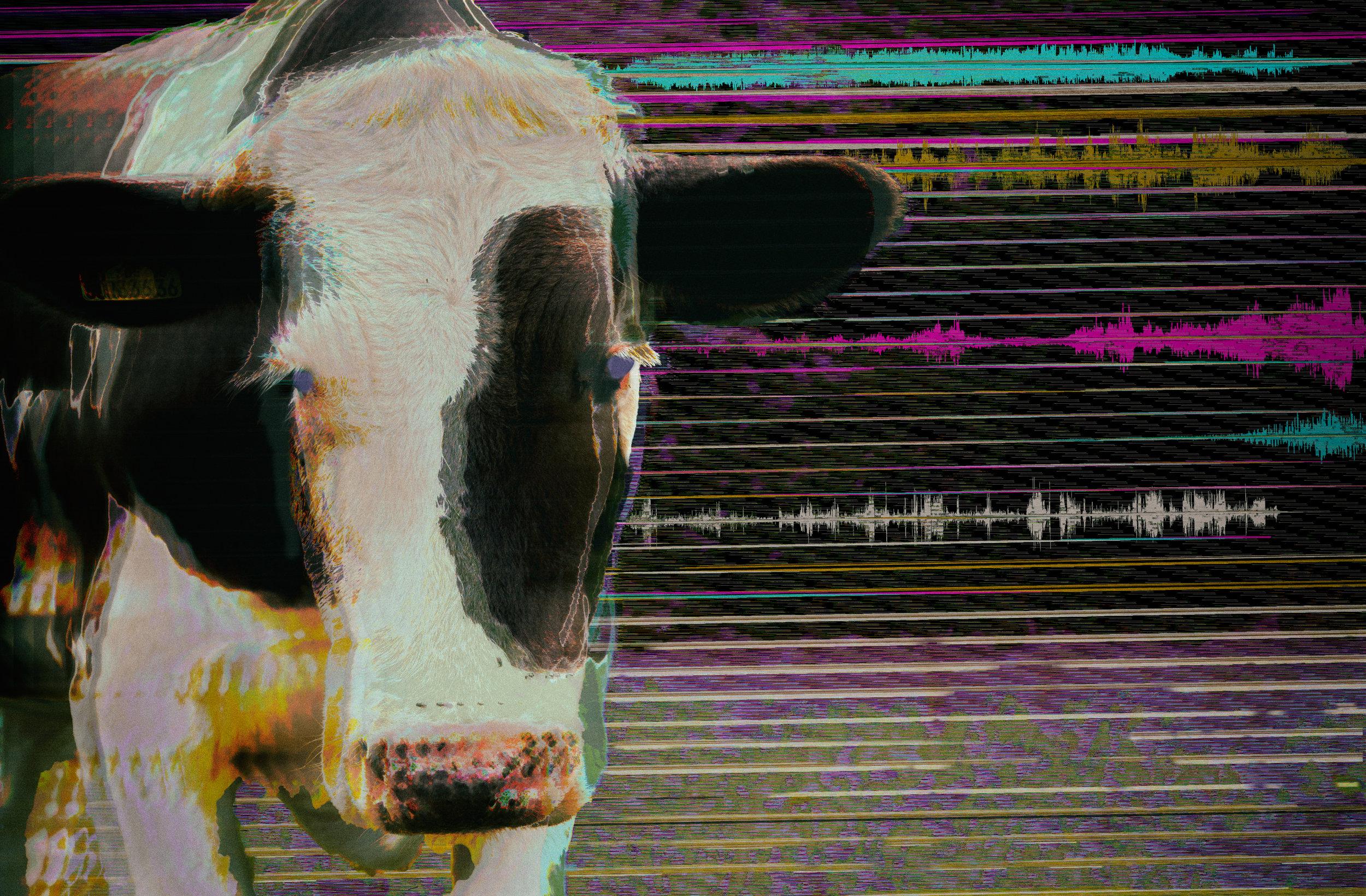 cow_waveform3.jpg