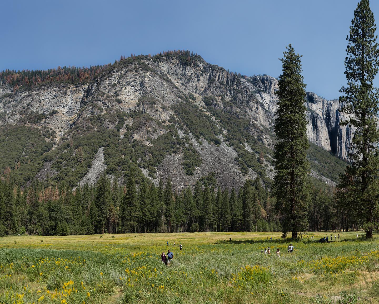 Yosemite Field, 2016