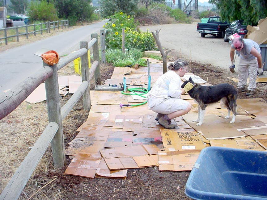 Daniel working on layout while Duke spreads the sawdust for the path.